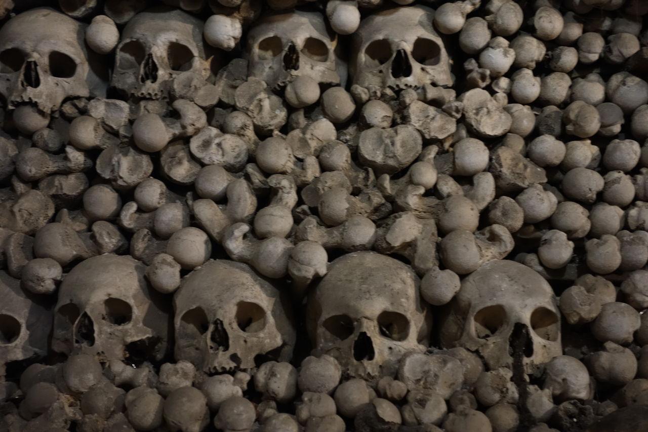 骸骨の画像 p1_25