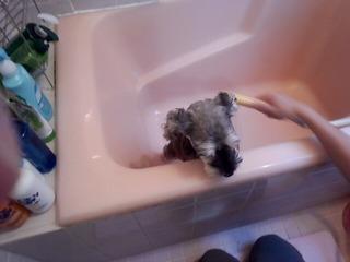 お風呂に入りました