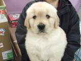 3月10日マリィちゃん子犬 003