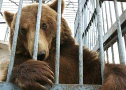 【閲覧注意】我が子はクマの檻の前にいた。もうすでに腕はなかった