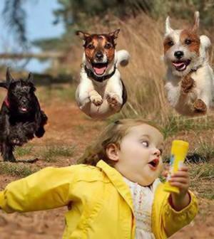 harmony-between-children-and-dog-L-CxACUk