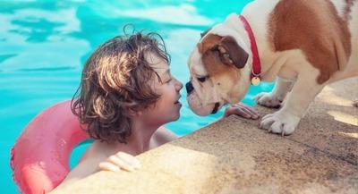 kid-and-bulldog-by-swimming-pool