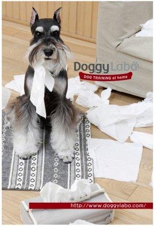 doggymain