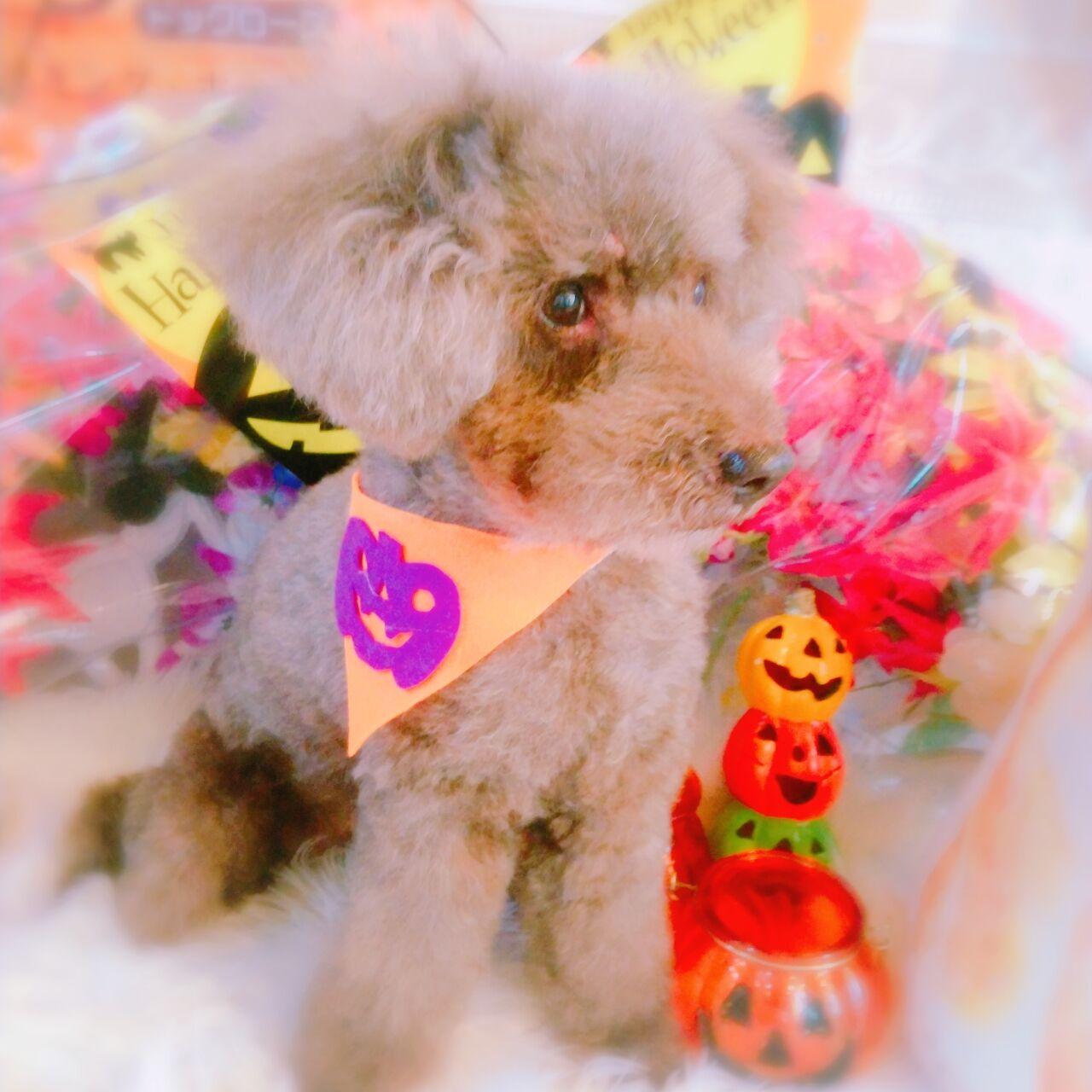 20-10-22-10-54-42-724_photo