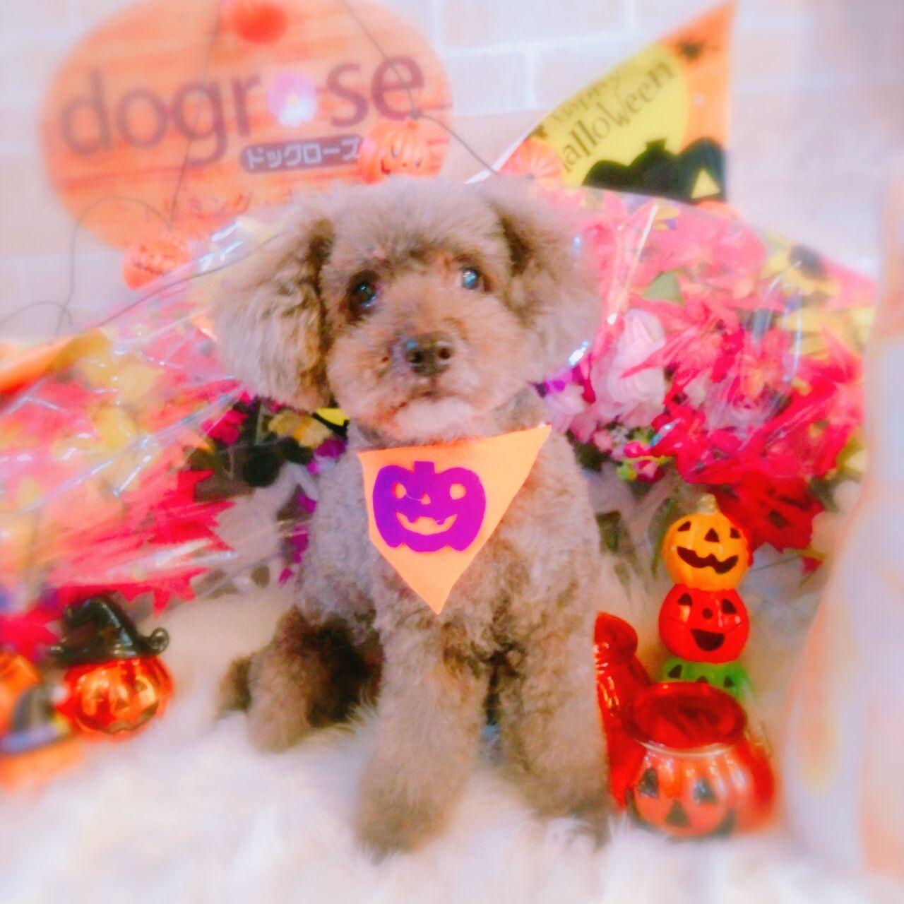 20-10-22-10-54-51-984_photo