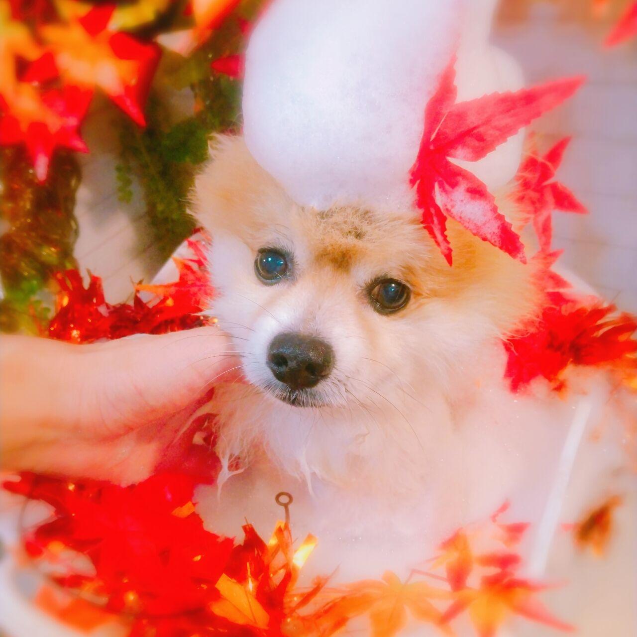 20-10-10-16-27-52-400_photo