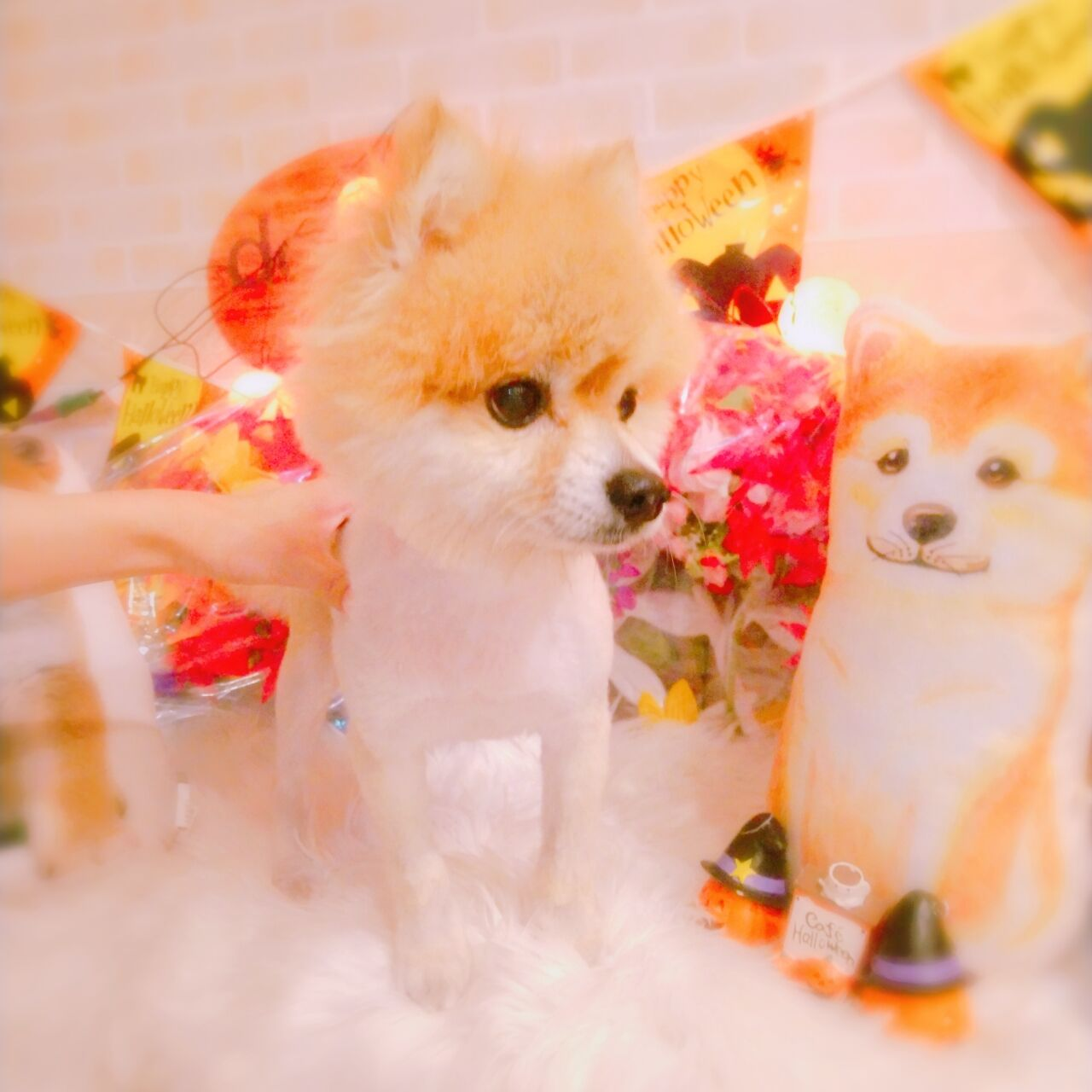 20-10-10-17-29-06-147_photo