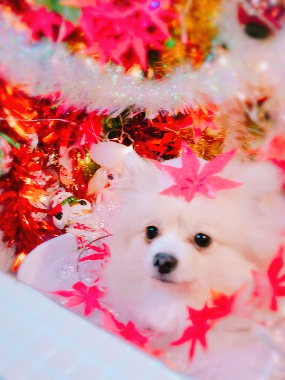 20-11-08-14-21-13-992_photo