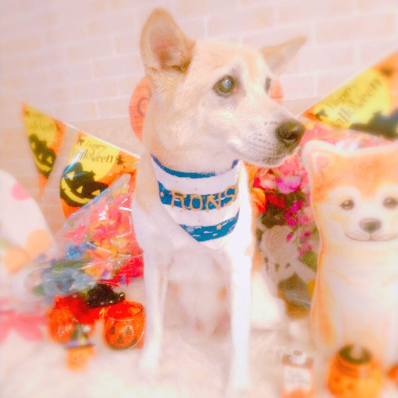 20-10-04-15-26-05-371_photo