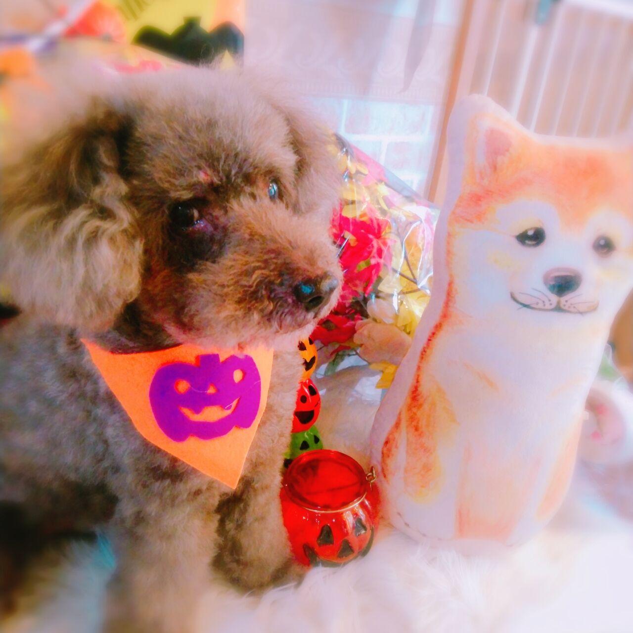20-10-22-10-54-59-412_photo