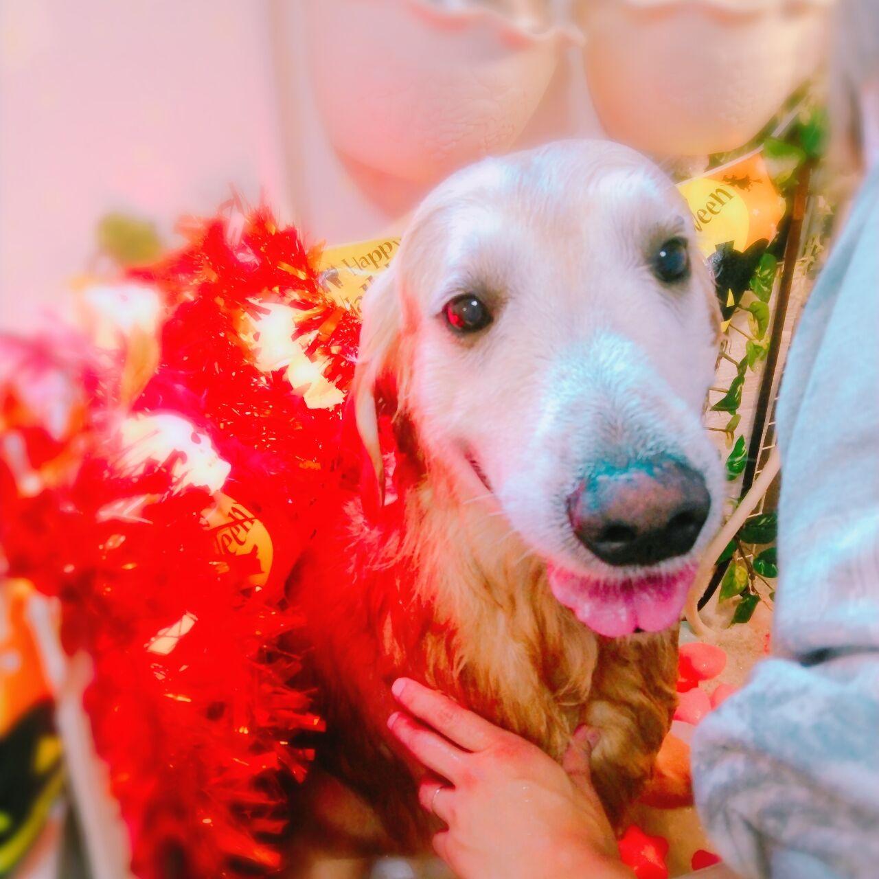20-10-16-11-40-09-991_photo