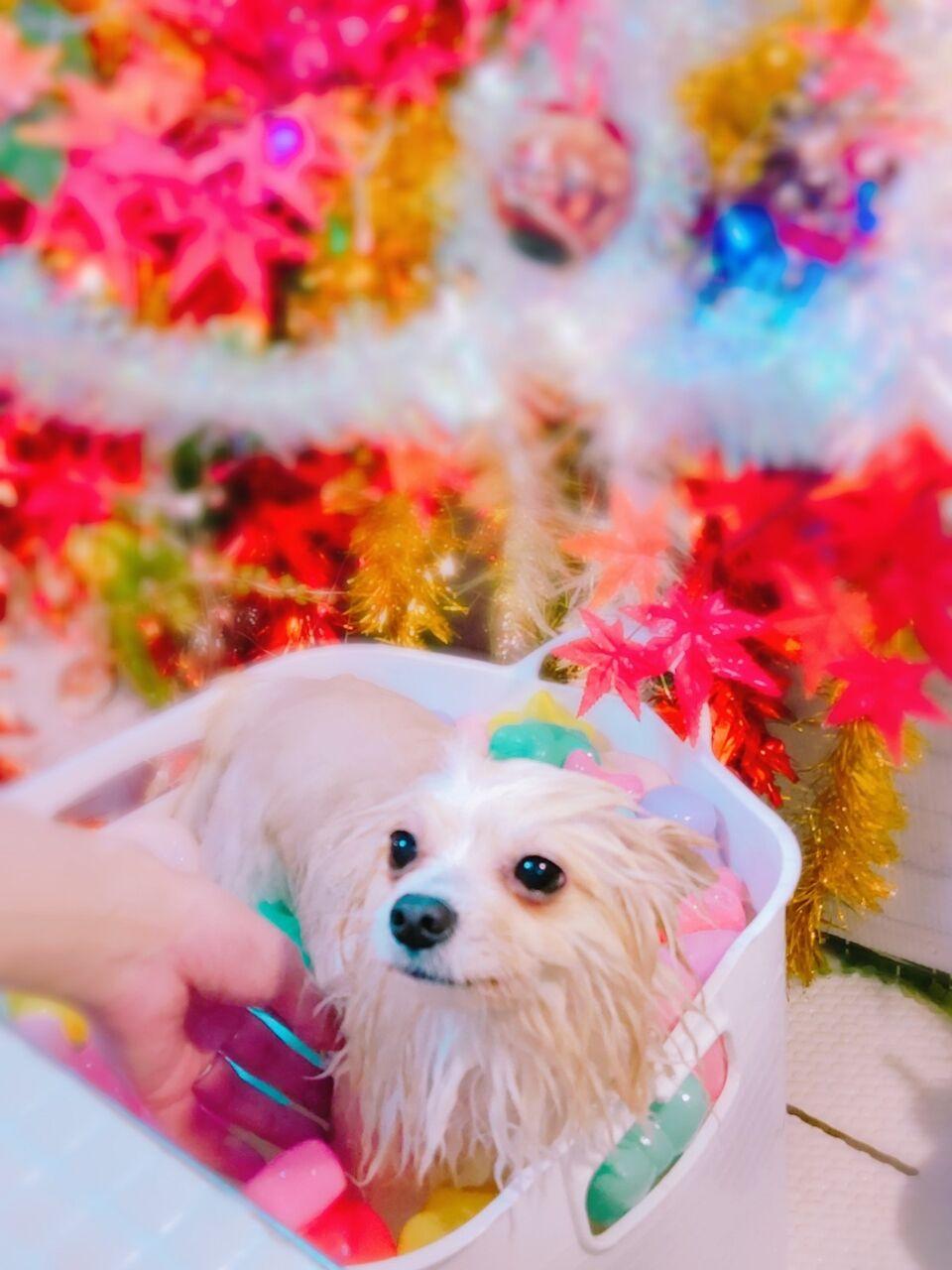 20-11-08-14-29-46-991_photo