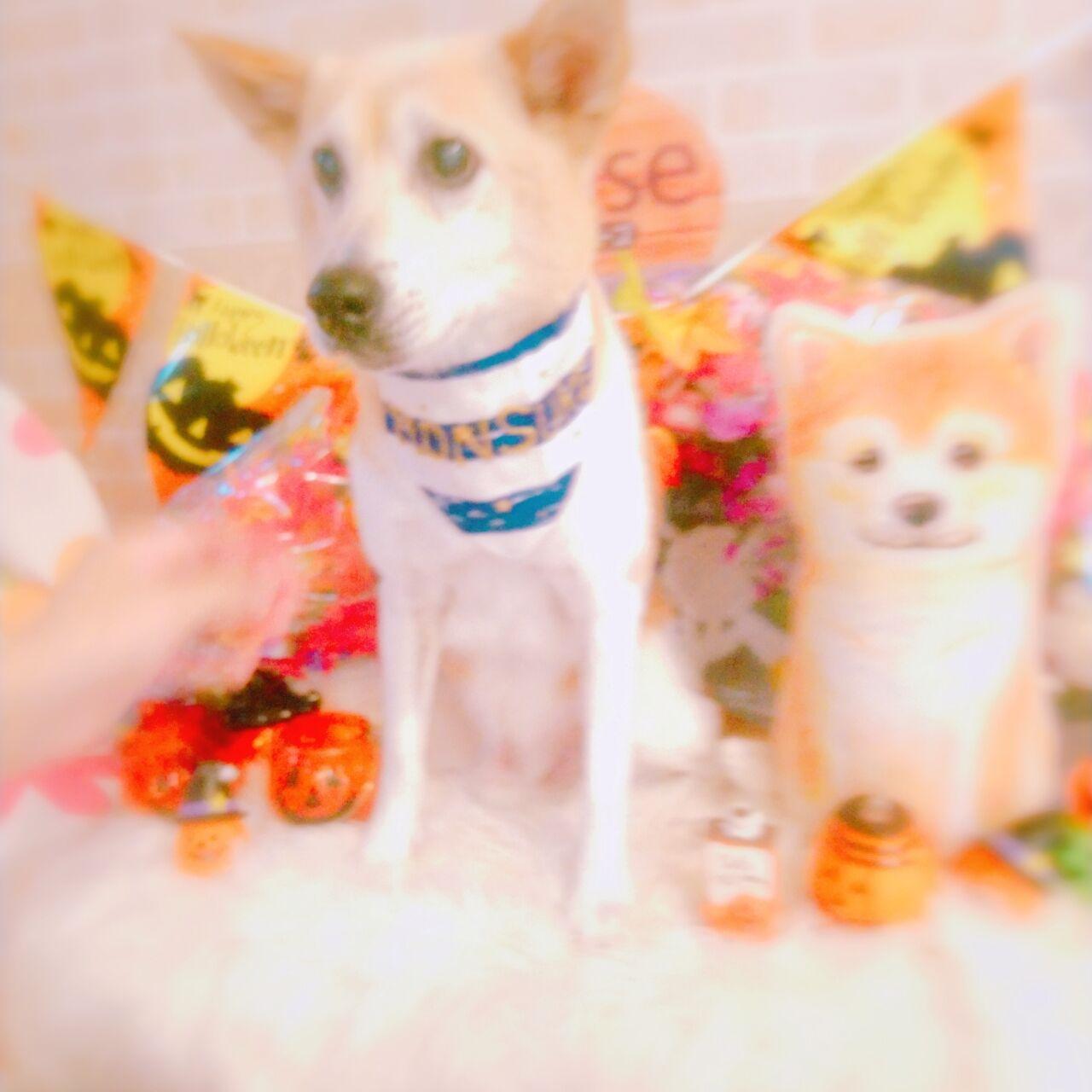 20-10-04-15-25-44-585_photo