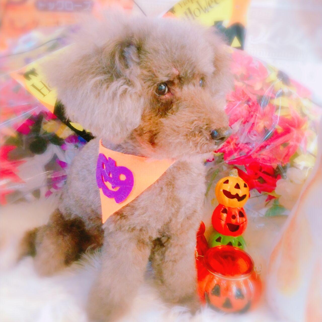 20-10-22-10-54-44-927_photo