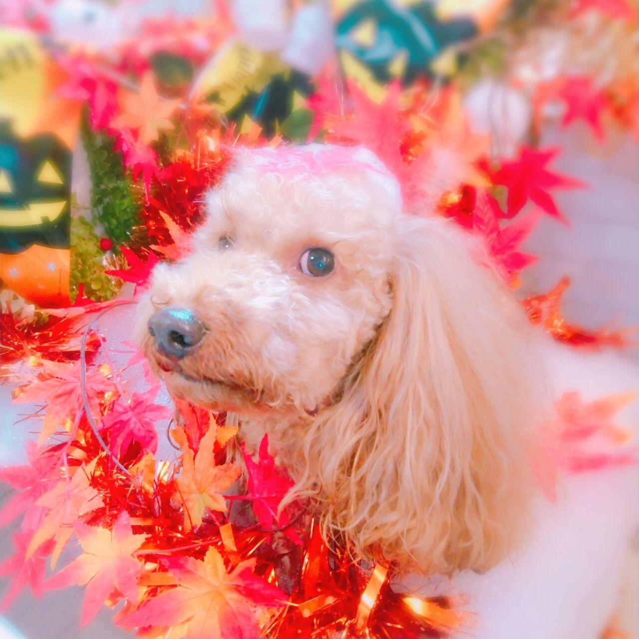20-10-10-12-16-49-868_photo