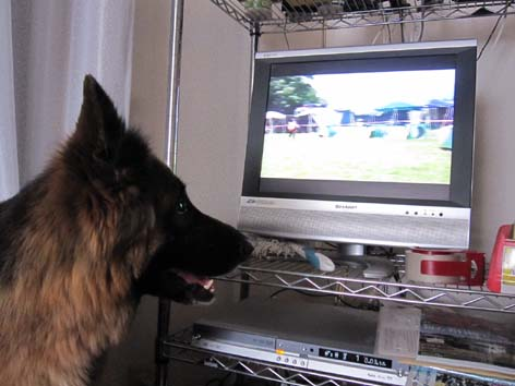 DVDを見るエバ