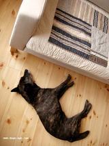 ソファと犬