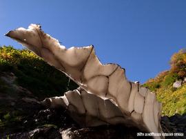 仙人谷の雪渓