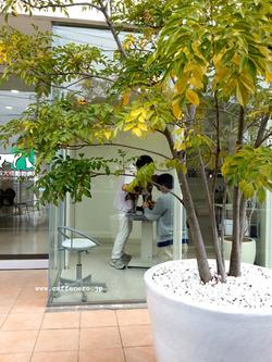 zoe-稲城大橋動物病院
