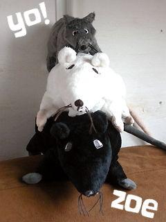 zoe のネズミたち