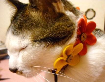 JR京都伊勢丹のネコ雑貨イベントに参加中です〜10日まで