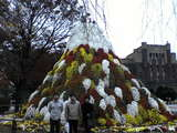 大阪城 菊の富士山