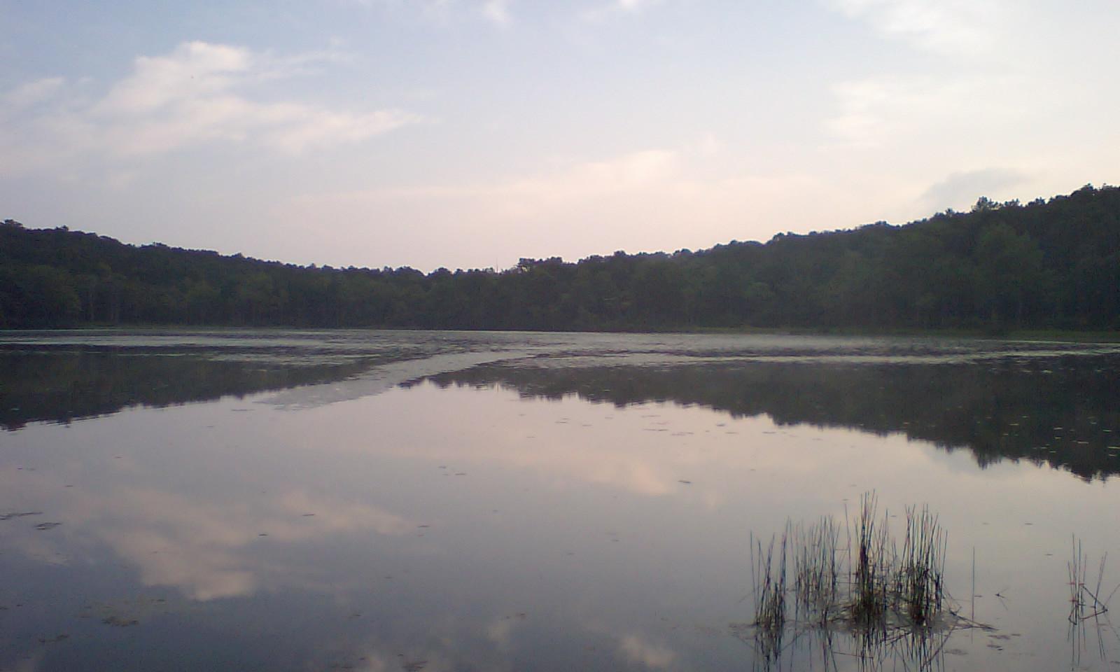 HI3A0002整然とした池の木立