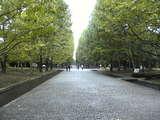 万博 欧州風 街路樹