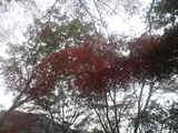 下からの紅葉