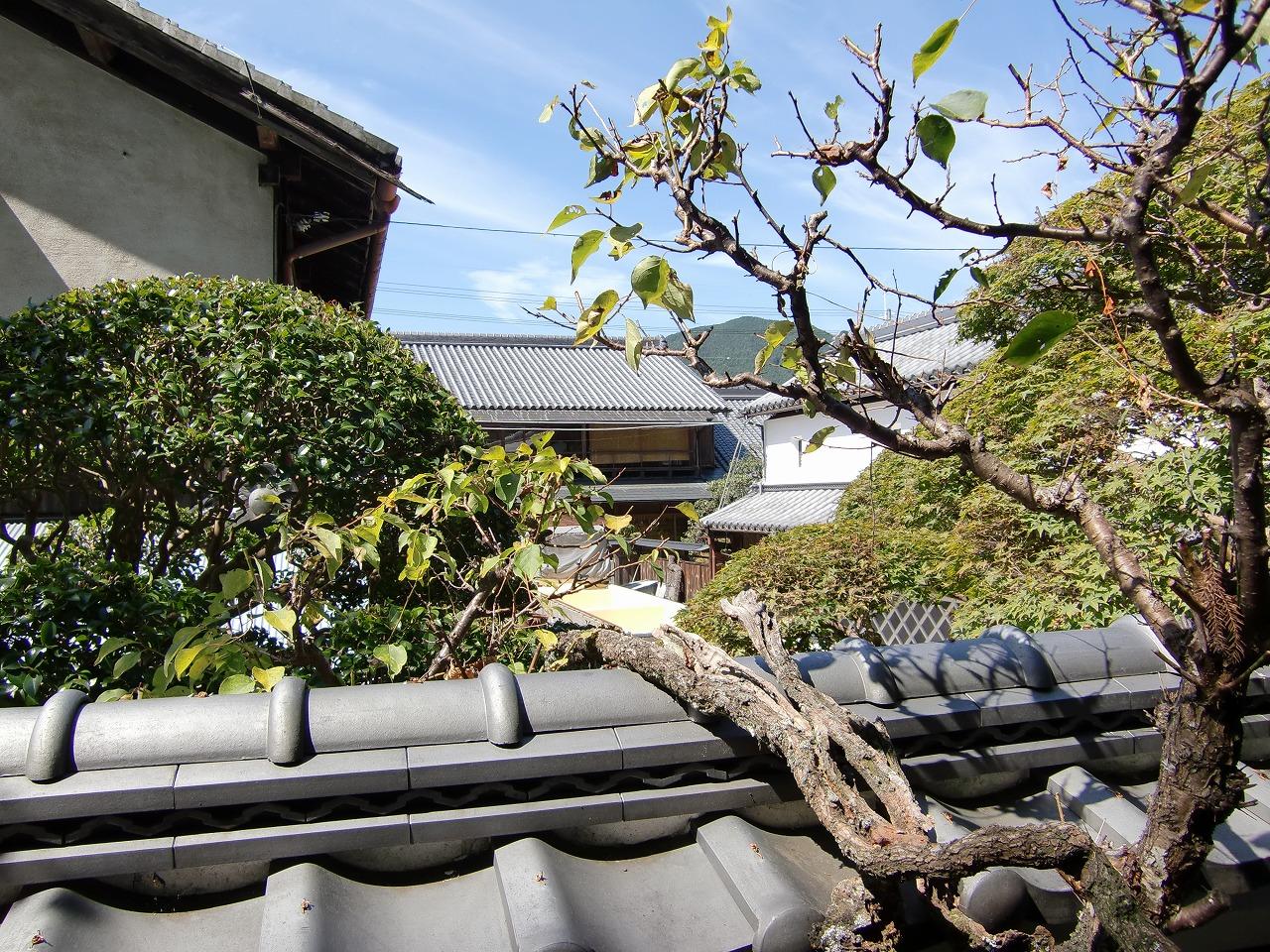 CIMG0006旧薬園からの風景