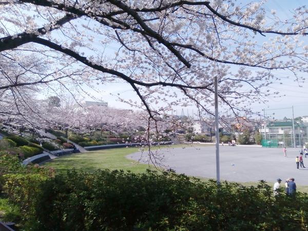 いの山東公園桜0326