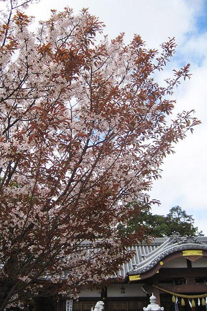 04_1544山桜半景420.jpg