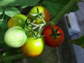 耕し、種を蒔き、手間と時間をかけて育つ姿は、どこか恋愛と似ている