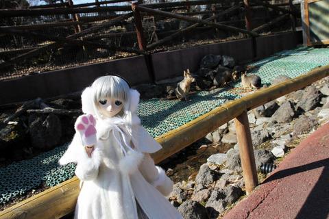 富士サファリパーク 121-2