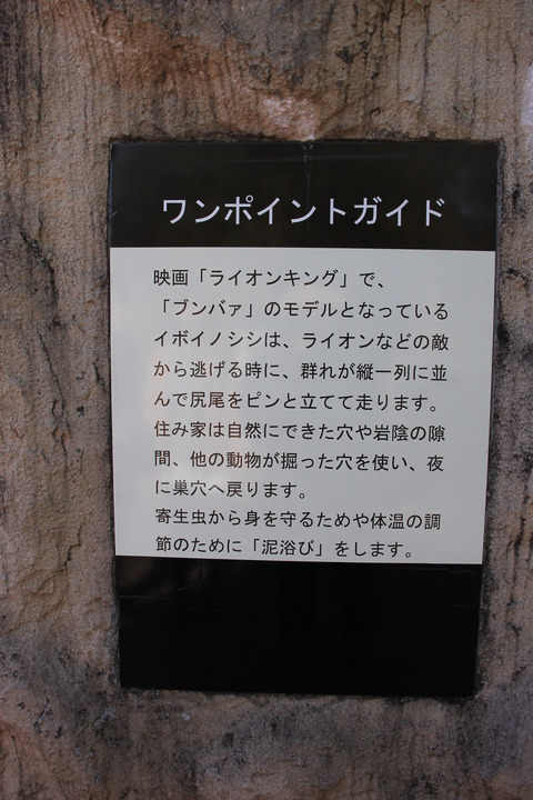 富士サファリパーク 130