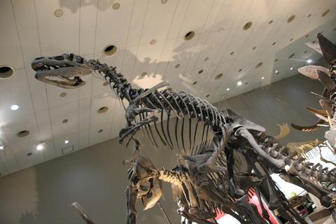 USJ、大阪自然史博物館 356