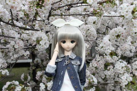 大阪城公園花見 142
