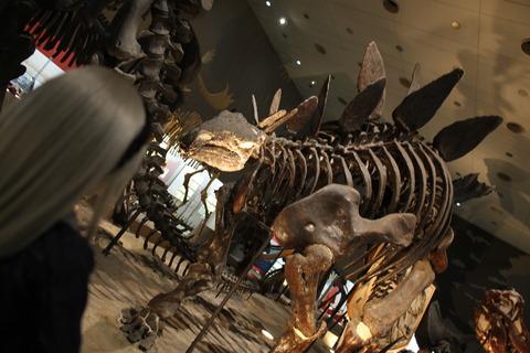 USJ、大阪自然史博物館 355