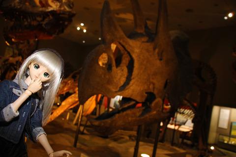 USJ、大阪自然史博物館 342-2