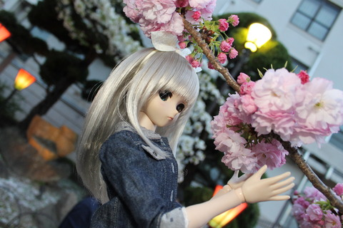 大阪城公園花見 174