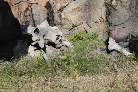 天王寺動物園 024