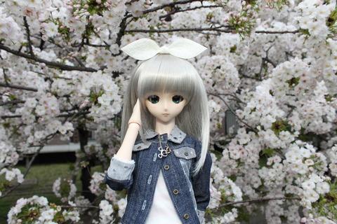 大阪城公園花見 143