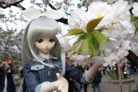 大阪城公園花見 155-2