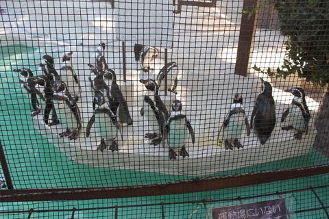 天王寺動物園 149