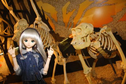 USJ、大阪自然史博物館 411-2