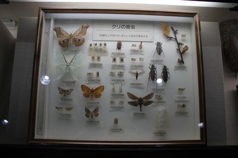 USJ、大阪自然史博物館 288