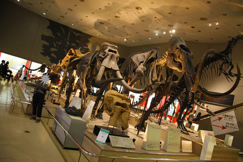 USJ、大阪自然史博物館 309-2