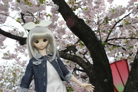 大阪城公園花見 127