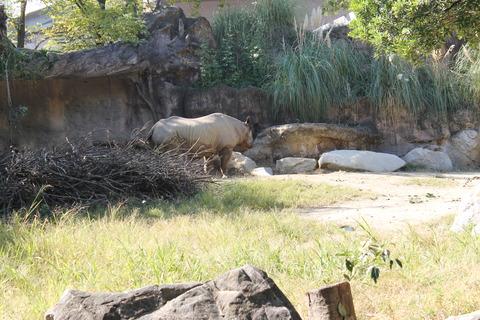 天王寺動物園 029