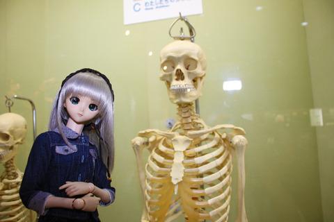 USJ、大阪自然史博物館 405-2